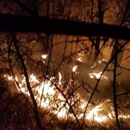 Gazipaşa'da çıkan orman yangınında 10 dekar kızılçam yandı