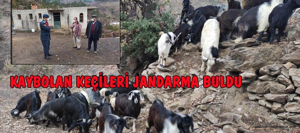 KAYBOLAN KEÇİLERİ JANDARMA BULDU