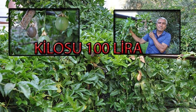 KİLOSU 100 LİRA