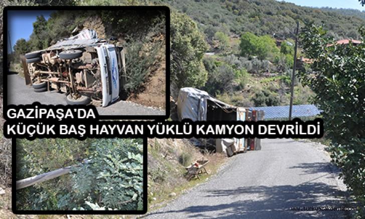 Küçükbaş hayvan satışı için kullanılan kamyon devrildi, maddi hasar meydana geldi