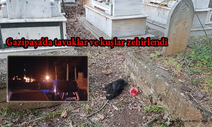 Gazipaşa'da tavuklar ve kuşlar zehirlendi